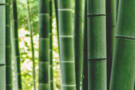 bamboo - green building materials