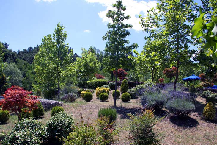 Garden with nice landscaping