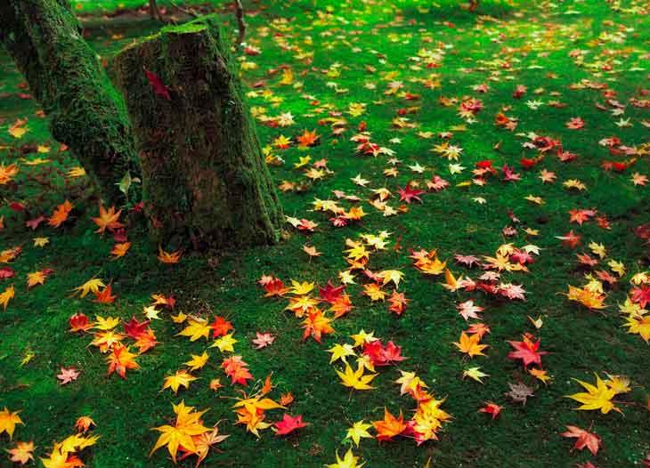 Leaves under tree