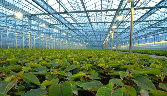 Types of greenhouses (by usage)