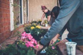 people gardening - how to start a communal garden