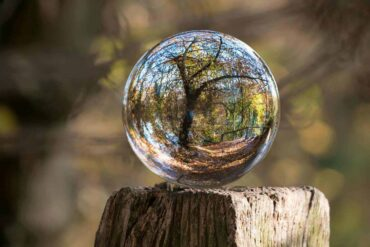 glass ball reflecting tree in forest - how being eco-friendly is good for mental health