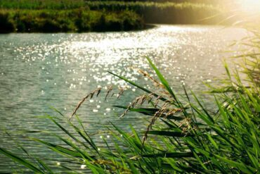 river in sunlight with grassy banks - micro-hydro power for home energy