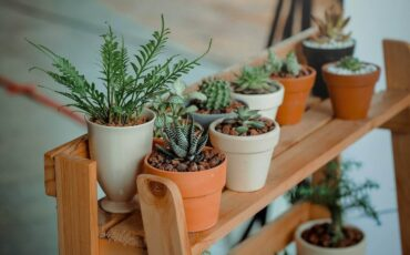 houseplants in clay pots on stand - 7 moving tips for transporting houseplants safely