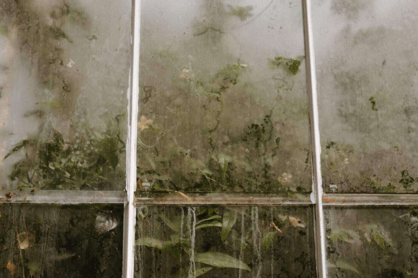 fogged greenhouse window with plants inside - how to ensure the longevity of your backyard greenhouse