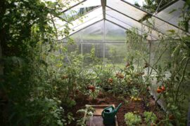 interior of greenhouse with tomatoes and watering can - how to ensure the longevity of your backyard greenhouse