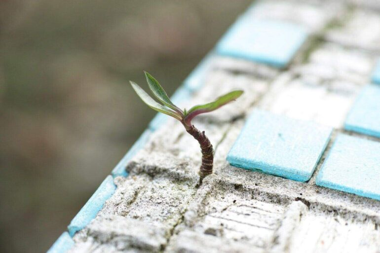 seedling sprouting between tiles being laid - 4 ways to modernize your kitchen with eco-friendly tiling