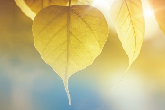 yellow leaves in sunlight - a guide to solar power - the best alternative to fossil fuels