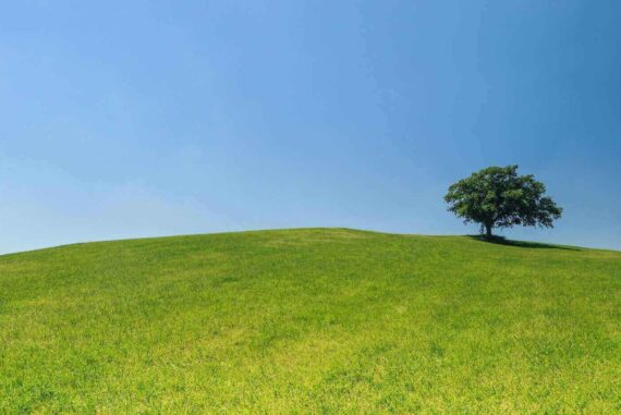 tree in field under blue sky - essential tips for managing and caring for trees on your property