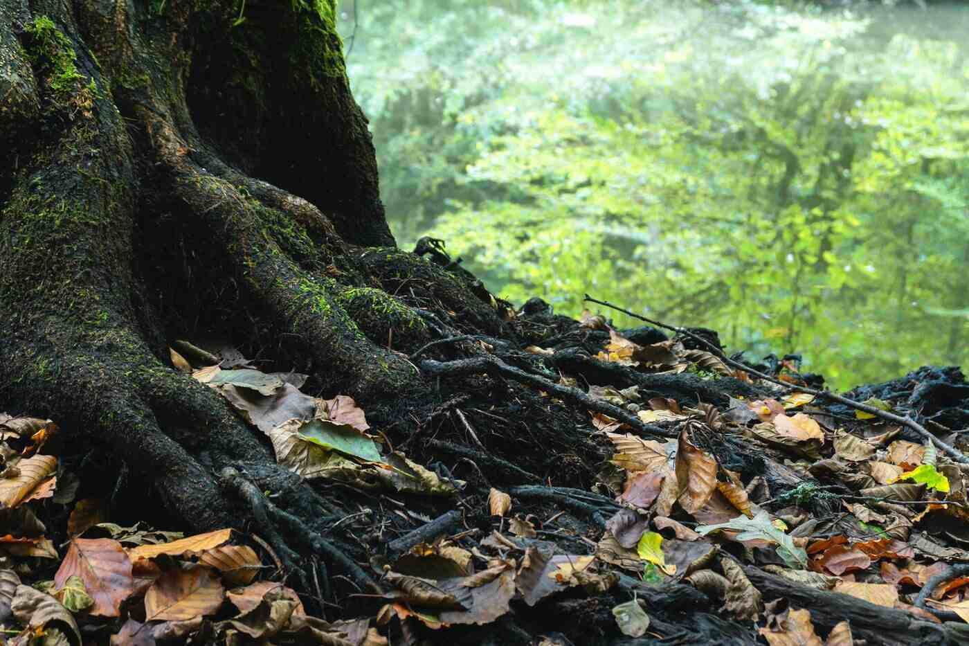 tree roots - essential tips for managing and caring for trees on your property